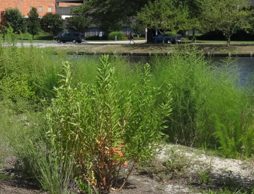 """CWP Free Friday Webcast """"Performance Enhancements to Stormwater BMPs"""""""