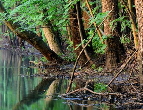 Chesapeake Bay Program Urban Stream Restoration FAQs